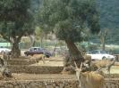 domusdea dee mediterraneo 2010-14