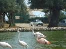 domusdea dee mediterraneo 2010-15