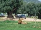 domusdea dee mediterraneo 2010-27