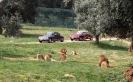domusdea dee mediterraneo 2010-54