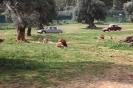 domusdea dee mediterraneo 2010-55